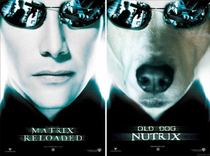 Matrix Reloaded (IamIrene/Imgur)