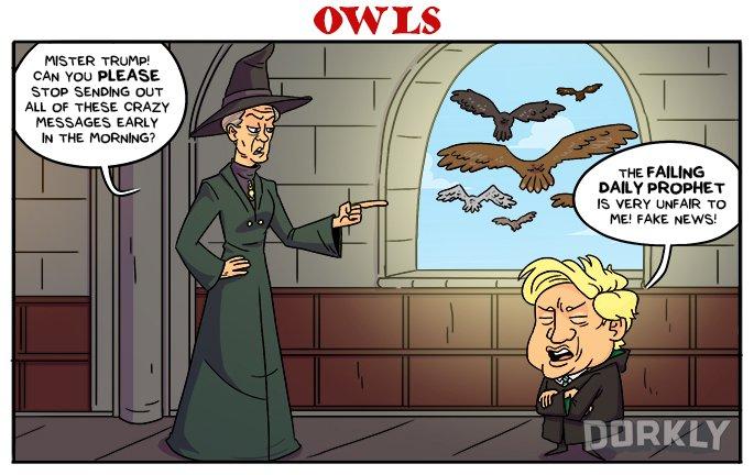 Owls (Dorkly)