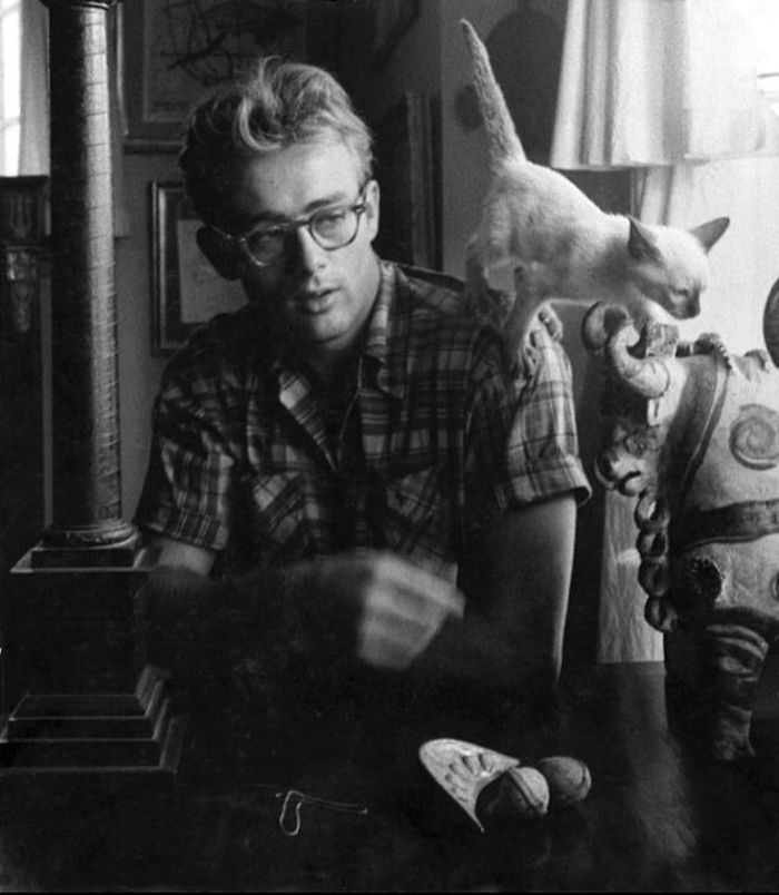 James Dean e il gatto Marcus - 1954 (Velvet Coke/Instagram)