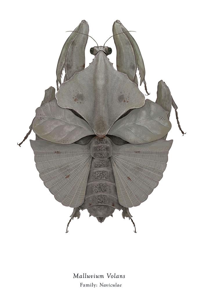 Malluvium Volans/Millennium Falcon (Richard Wilkinson)
