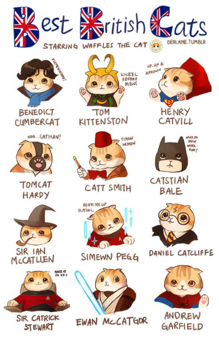 Best British Cats (Derlaine)